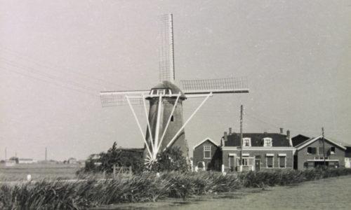 Maasland, Drie Lelies (A-01712-1-72)